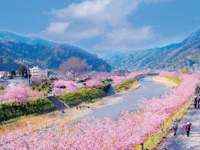 Япония в цвету