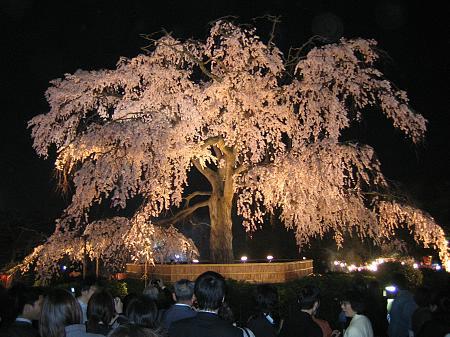 Sakura Hi-Tech